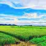 農會低利率貸款整理 含資格條件、辦理流程及試算(2021新版)